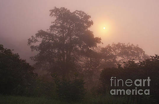 Jonathan Welch - Foggy Sunrise
