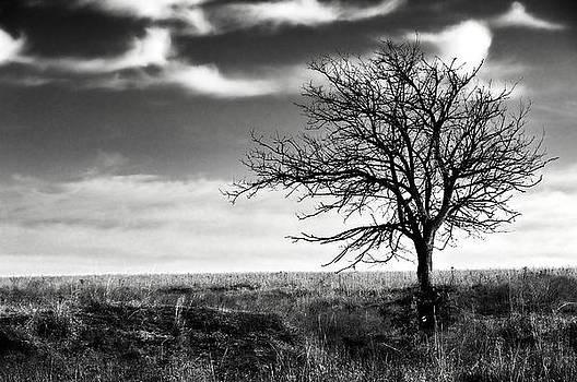 Eric Benjamin - Lone Tree 2