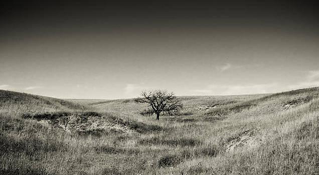 Eric Benjamin - Lone Tree Winter