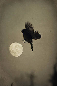 Emily Stauring - Moon In Flight 1