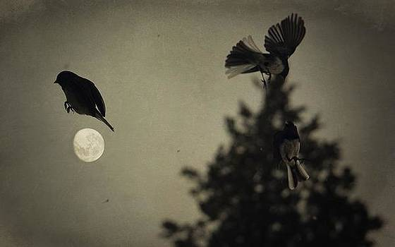 Emily Stauring - Moon In Flight 10