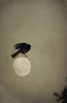 Emily Stauring - Moon In Flight 11