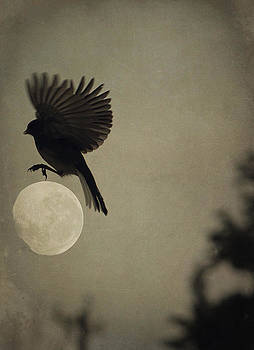 Emily Stauring - Moon In Flight 12