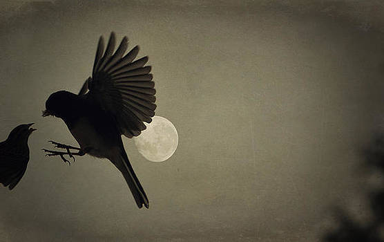 Emily Stauring - Moon In Flight 13