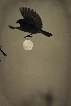 Emily Stauring - Moon In Flight 4