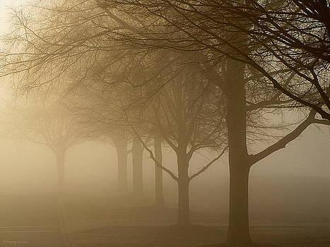 Greg Simmons - Oaks in the Fog