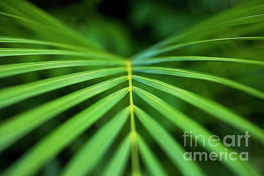 Charmian Vistaunet - Palm Leaf Pattern