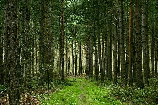 Svetlana Sewell - Path through the Woods