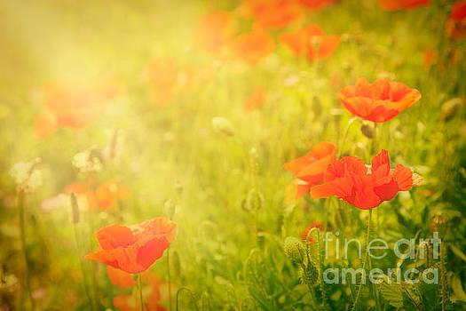 Mythja  Photography - Poppy flower
