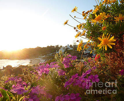 Adrienne Franklin - Portugal Sunset