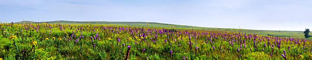 Eric Benjamin - Purple Hills