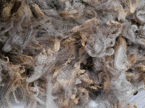 Hakon Soreide - Raw Wool 2