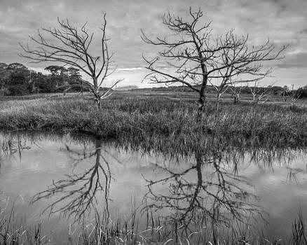 Debra and Dave Vanderlaan - Salty Marsh at Jekyll Island in Black and White