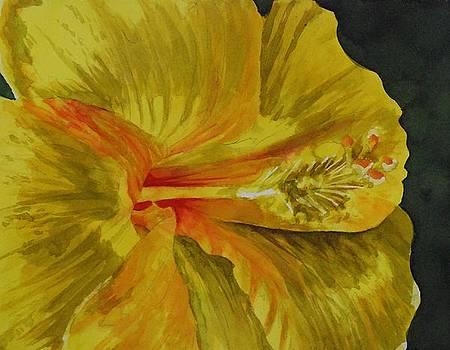 Donna Pierce-Clark - Sunlit Yellow Hibiscus