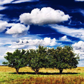 Eric Benjamin - Three Trees