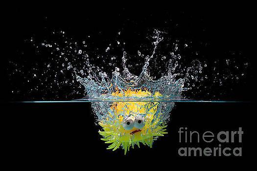 Simon Bratt Photography LRPS - Toy fish splashing into water
