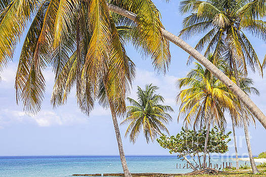 Patricia Hofmeester - Tropical beach with palm trees