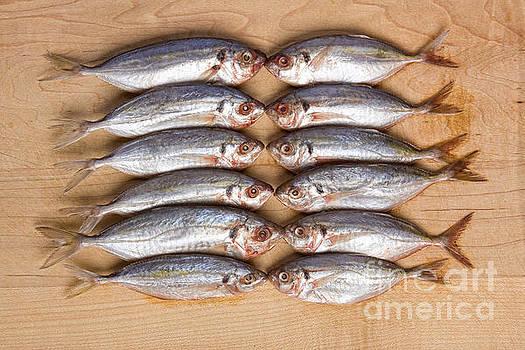 James BO  Insogna - Twelve Kissing Fish
