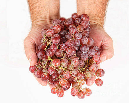 James BO  Insogna - Two Handfuls of Red Grapes