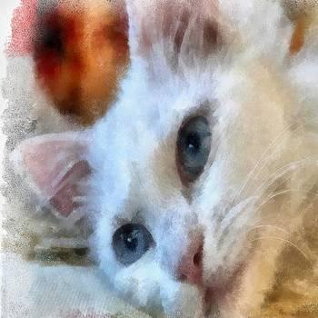 Tracey Harrington-Simpson - Van Cat Portrait