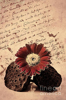 Angela Doelling AD DESIGN Photo and PhotoArt - Vintage letters