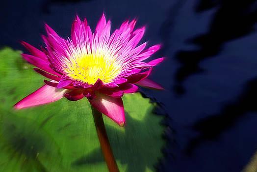 Marty Koch - Water Flower