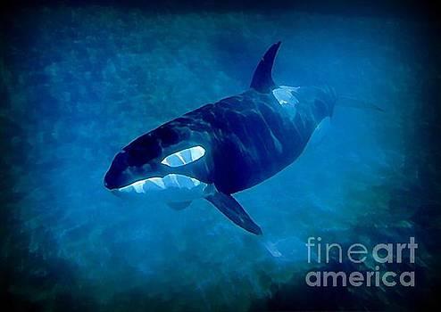 John Malone - Whale