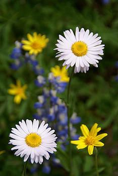 Robert Lozen - WHITE WILD FLOWERS