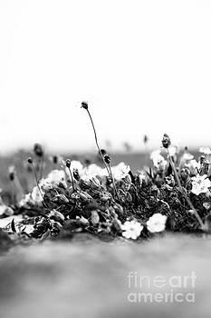 Anne Gilbert - Wildflower Wall