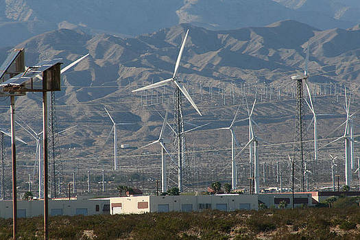 Marsha Ingrao - Wind Farm