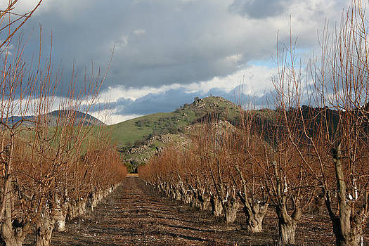 Marsha Ingrao - Winter Fruit Orchard