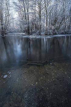 Svetlana Sewell - Winter Reflections