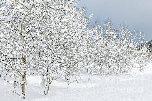 Sandra Bronstein - Winter