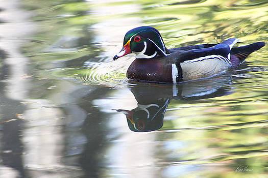 Diana Haronis - Wood Duck