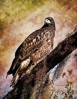 Deborah Benoit - Young Eagle Pose II