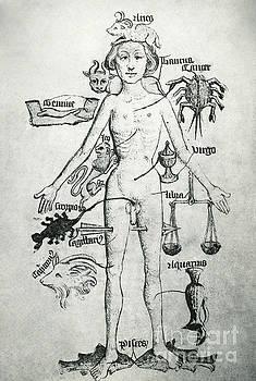 Photo Researchers - Melothesic Figure
