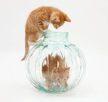 Mark Taylor - Kittens