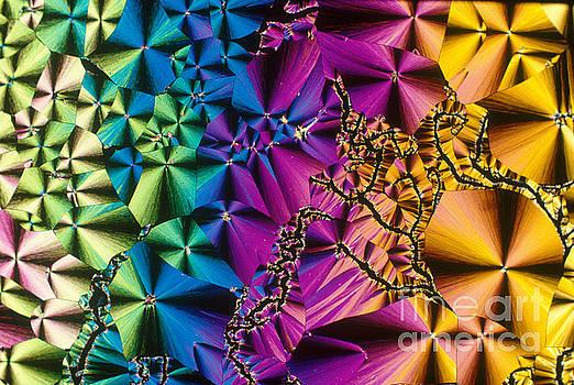 Michael W Davidson - Vitamin B1 Crystal