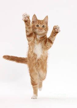 Mark Taylor - Ginger Kitten