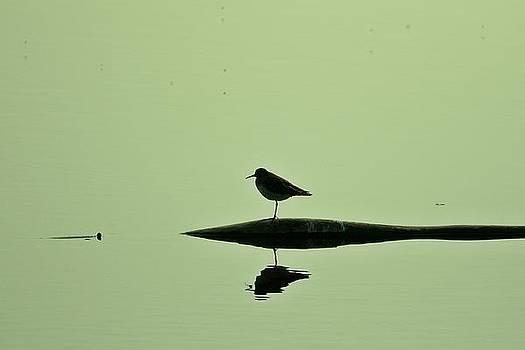 Mario Brenes Simon - Bird in a pond