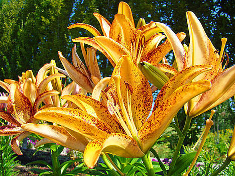 Baslee Troutman - Bold Colorful Orange Lily Flowers Garden