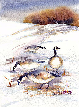 Peggy Wilson - Canada Geese in Stubble Field