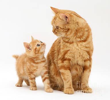 Jane Burton - Cat And Kitten