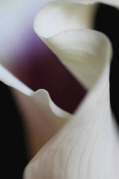 Juergen Roth - Floral Forms of a Calla Lily