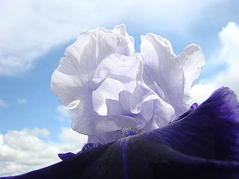 Baslee Troutman - Floral Iris Flower art print Blue Sky White Clouds