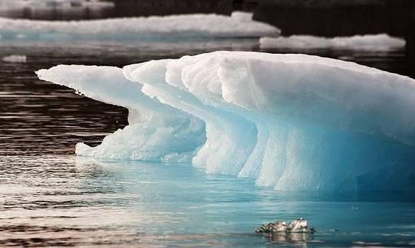 Elisabeth Van Eyken - Ice Bears
