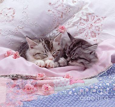 Jane Burton - Silver Tabby Kittens