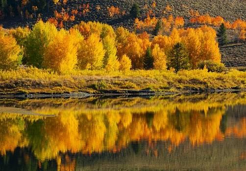 Sandra Bronstein - Sunrise Reflection Grand Teton National Park