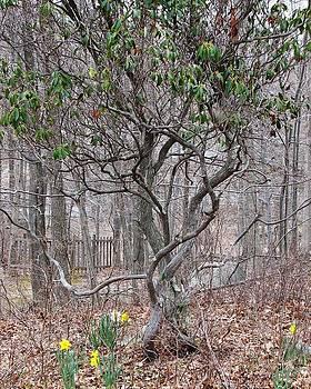 Casey Roche - Twisty Tree