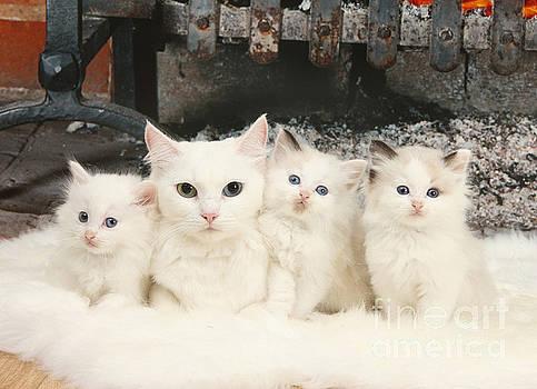 Mark Taylor - White Cats